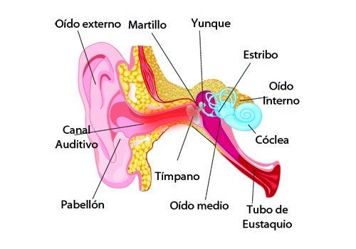 ¿Es recomendable aliviar el dolor de oídos con remedios naturales?