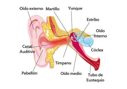 Remedios caseros para el dolor de oídos
