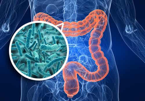 ¿Cómo mejorar la flora intestinal?