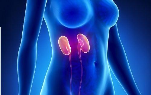 Tratamiento natural para la insuficiencia renal