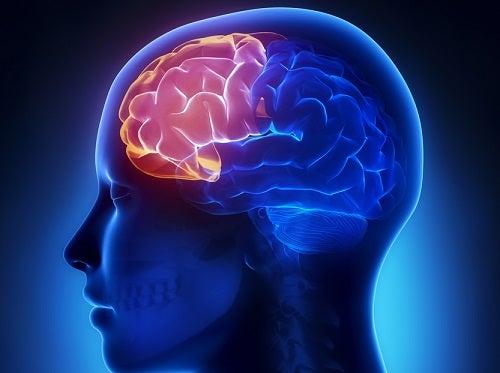 ¿Hay batidos que realmente ayuden a mejorar la memoria?