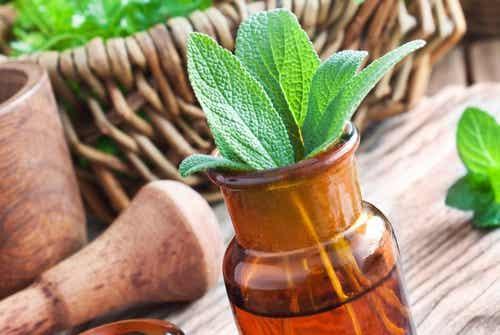 Las 15 mejores hierbas medicinales y sus usos