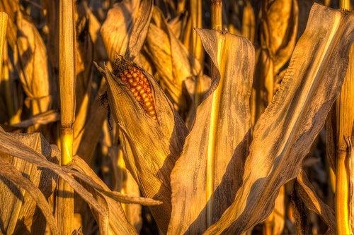 Qué hay en tus palomitas_maíz