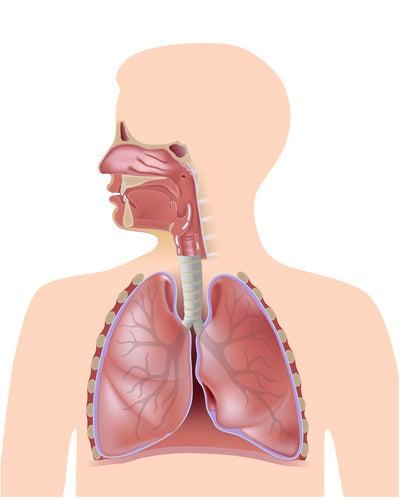 Respiracion