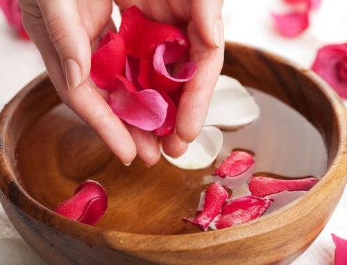 Agua de rosas: elaboración y beneficios
