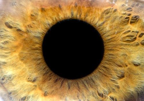 Tips para evitar enfermedades en tus ojos