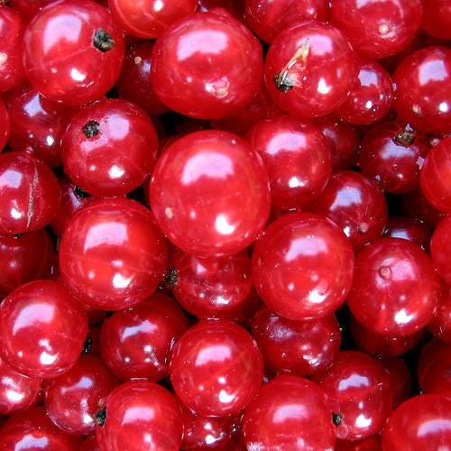 arandano rojo doc(q)man