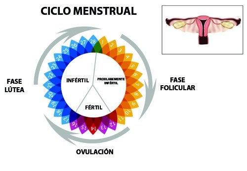 Menstruacion veces mes te 2 al cuando la viene pasa que