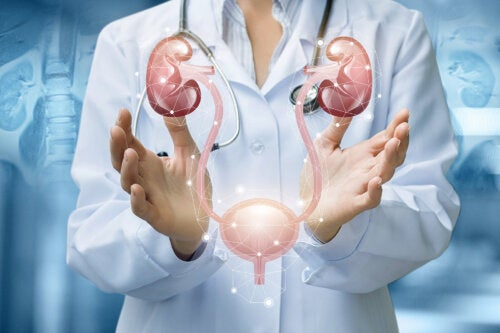 Cómo cuidar de tus riñones y vejiga
