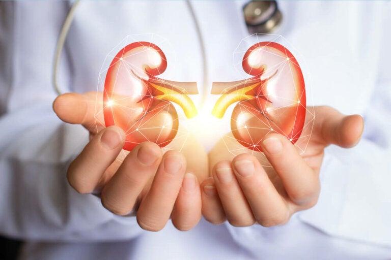 5 cosas que debes saber para tener riñones sanos