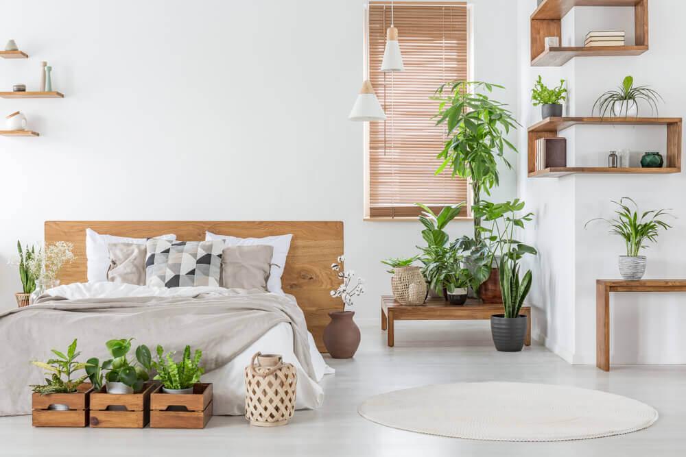 ¿Para qué sirve tener plantas en el hogar?