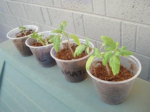 las-plantas-en-el-hogar-aportan-equlibrio-al-ambiente