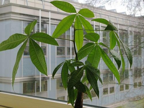 Las plantas en el hogar mejoran el ambiente