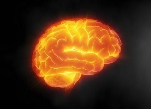 Cuidar del cerebro