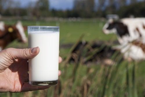 ¿Por qué las personas no deberían beber leche de vaca?