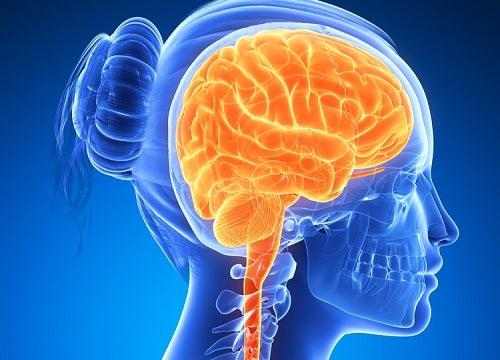 ¿Por qué los frutos secos son buenos para el cerebro?
