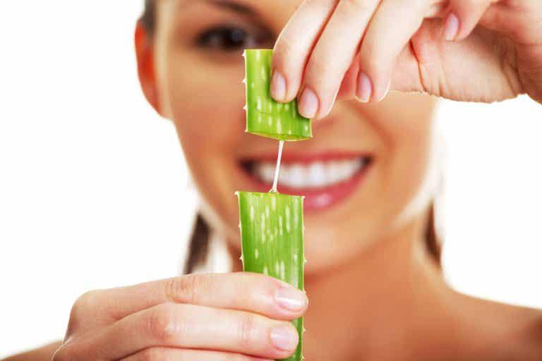 Aloe vera, planta medicinal refrescante y cicatrizante