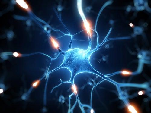El Resveratrol, un excelente escudo para el cerebro
