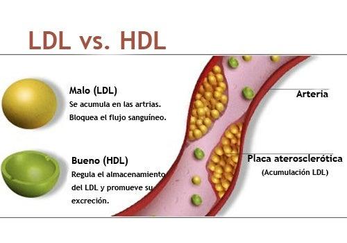 Como elevar el hdl en sangre