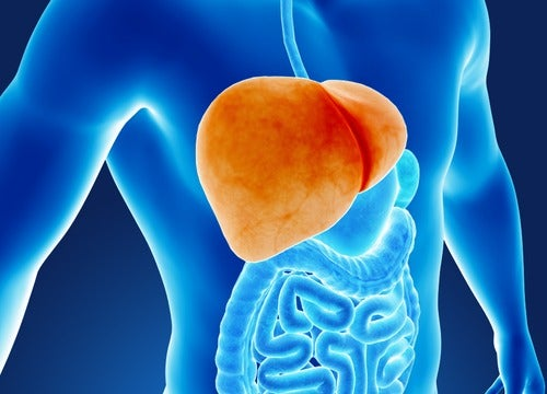 6 hábitos que dañan nuestro hígado