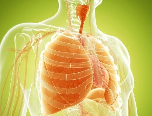 Resultado de imagen para para fortalecer los pulmones
