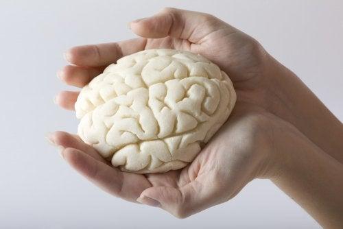 Hemisferios del cerebro. Golpes.