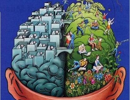 División de los hemisferios del cerebro.