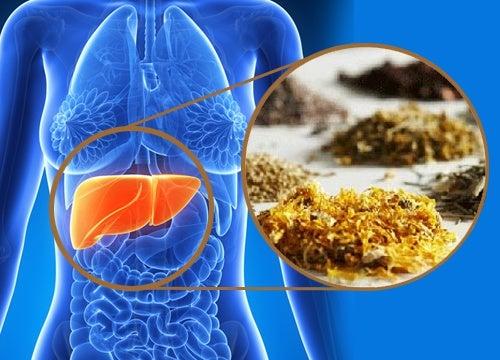 beneficios de la achicoria para el hígado