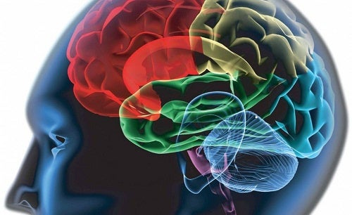 ¿Cómo mejorar la concentración con remedios naturales?