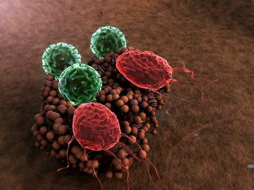 ¿Qué destruye tu sistema inmune?