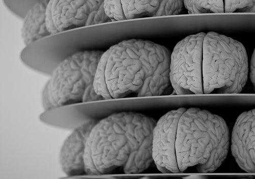 cerebro6