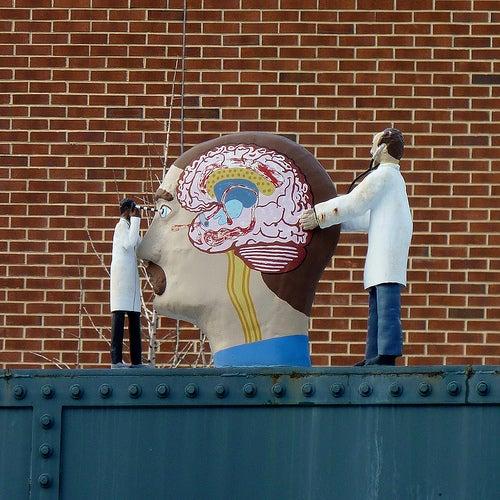 cerebros8