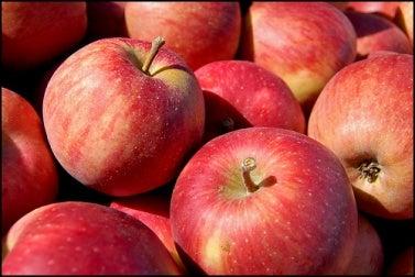 manzana tom gill