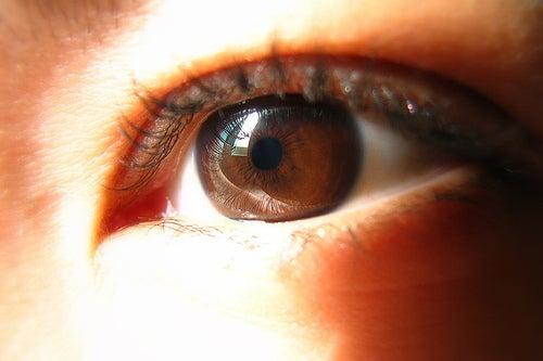Iris marrones