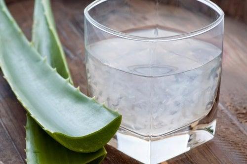 El aloe vera es una planta con propiedades calmantes muy beneficiosas en caso de padecer de encías sangrantes.