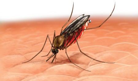 usos de la cebolla: contra las picaduras de insecto