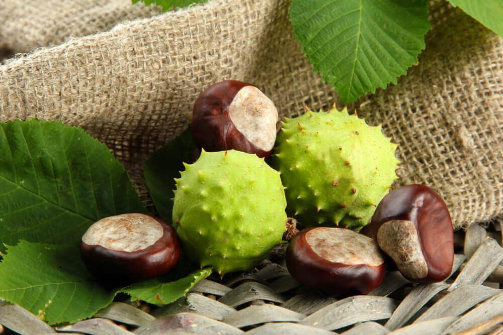 El castaño de Indias tiene propiedades medicinales.