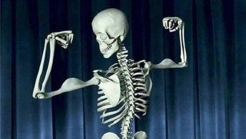 Consumir leche fortificada ayuda a tener unos huesos fuertes.