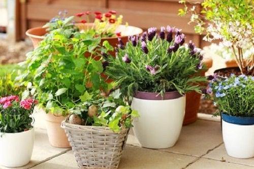 Cuidado de las plantas en el hogar