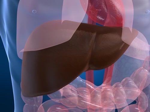 ¿Es posible prevenir naturalmente los problemas hepáticos?