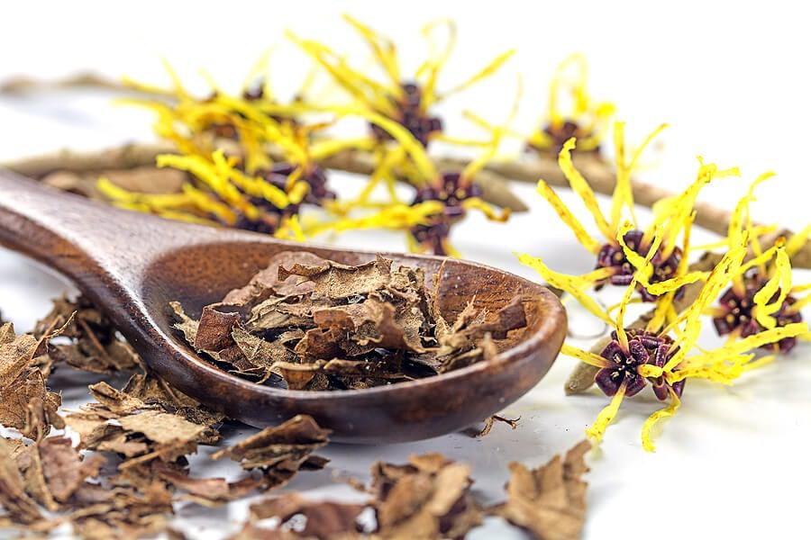 Cuchara de madera con flores de hammamelis