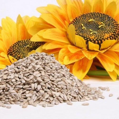pipas semillas de girasol