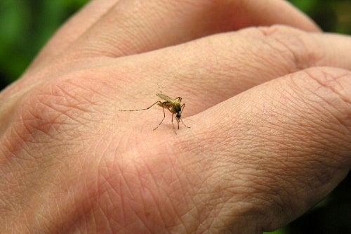 Todo lo que deberías saber sobre las picaduras de mosquito