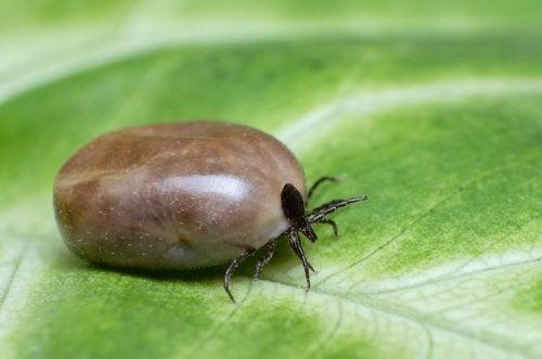 ¿Cómo eliminar pulgas y garrapatas naturalmente?