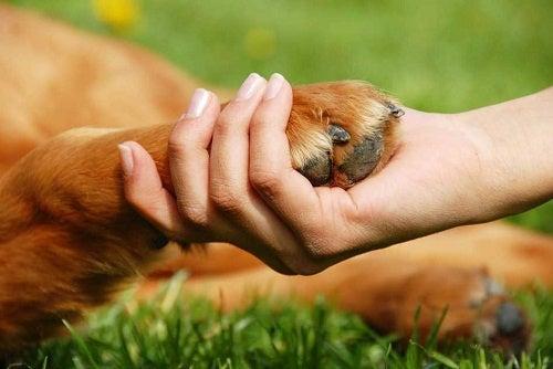 Beneficios para nuestra salud de tener una mascota