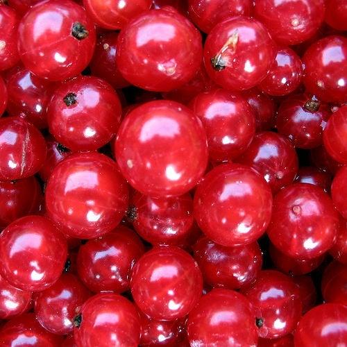 arandano rojo para prevenir las infecciones urinarias