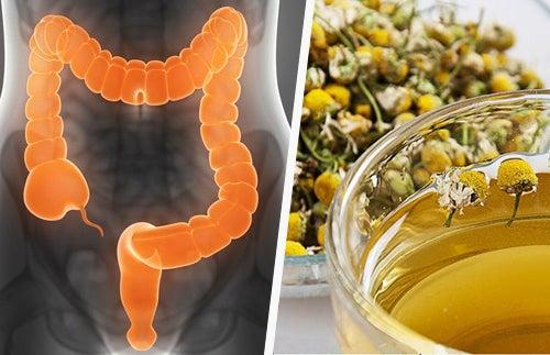 ¿Es posible depurar el colon con hierbas medicinales?