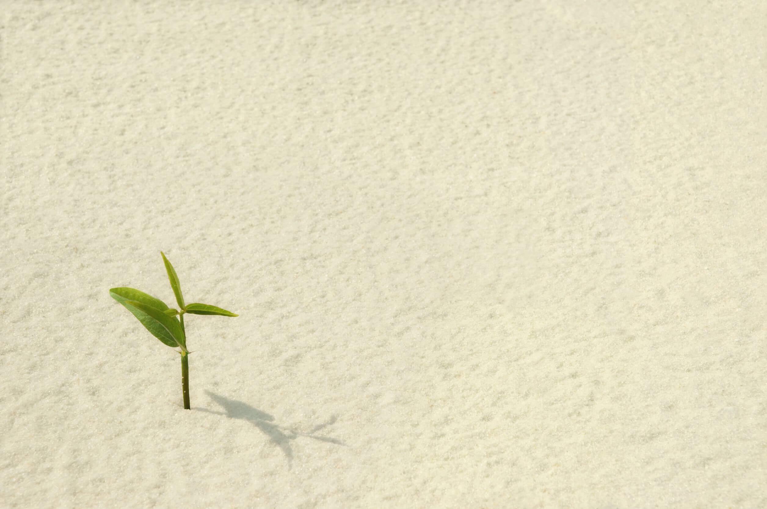 La resiliencia debe cultivarse.