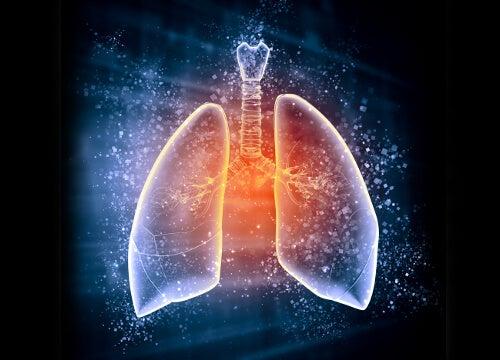 Hierbas medicinales para fortalecer tus pulmones