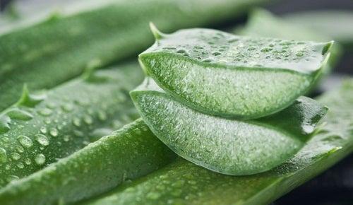 Dos remedios con Aloe Vera para aliviar las hemorroides